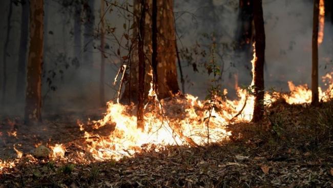 حرائق أستراليا.. مقتل 24 شخصا وحرق 6 ملايين هكتار ونفوق 500 مليون حيوان