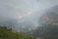 حريق ضخم يلتهم أشجار المواطنين في برقة بنابلس