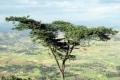 لعنة الجفاف الاخضر تجتاح مناطق واسعة من اثيوبيا
