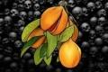 مذبحة «باندا» في أندونسيا.. حين أبادت هولندا شعبًا بأكمله من أجل شجرة توابل!
