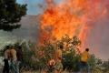 حرائق الغابات تهدد مسقط رأس الأولمبياد