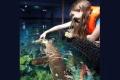 اكتشاف أول سمكة قرش نباتية في العالم