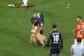 بالفيديو.. كلبان يعطِّلان مجريات لعبة كرة قدم في المانيا