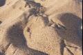 ما الأكثر عددا، حبات الرمل في الأرض ام النجوم في السماء ؟؟