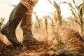 تناول حبة لوز يكلّف الكوكب لتراً من المياه! إليك أبرز النباتات التي يؤثر استهلاكها على ...