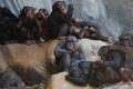 علماء كشفوا أنه يرقص.. هل قلد الإنسان الشمبانزي؟