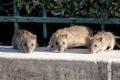 بسبب الجوع الناجم عن الإغلاق.. الفئران تغزو منطقة في باريس