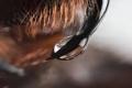 فتش عن الأنثى.. كيف اكتسب سم ذكور العناكب القدرة على قتل البشر؟