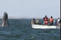 كائنات بحرية غريبة تغزو الأطلسي وتهدد ثروته السمكية