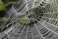 العلماء يتطلعون إلى التحدث مع العناكب بعد ترجمة شبكاتها إلى موسيقى