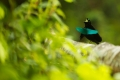 طيور الخيال: أكثر الطيور إثارة للإعجاب في العالم !!