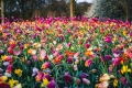 بالصور  أجمل الحدائق حول العالم يمكنك التجول فيها عبر الإنترنت