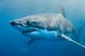 صدّق أو لا تصدّق: خوفك من الثعابين وأسماك القرش و8 حيوانات أخرى بلا مبرر!