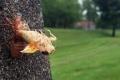حشرة الزيز السحرية تغزو الولايات المتحدة.. أسرار الخروج الكبير بعد 17 عاما تحت الأرض