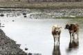دول جنوب اوروبا تعاني أسوء موجة جفاف منذ 60 عاماً ...والخطر يتهدد المحاصيل الزراعية والحيوان ...