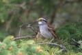 """طائر نادر """"يخرج من مخبئه"""" بعد 170 عاماً من الغياب.. اعتقد الباحثون أنه انقرض (صورة)"""