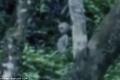 تسجيل فيديو غريب عجيب يظهر وجود كائنات غريبة في الامازون
