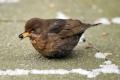 الطيور أيضاً ضمن قائمة المتضررين من موجة البرد الشديد في أوروبا