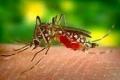 أخطر من الأسود والأفاعي... لماذا يعد البعوض أكثر حيوان مميت في العالم