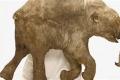 كيف حافظت الطبيعة على كائنات ما قبل التاريخ؟