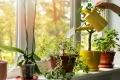 قلته أو كثرته قد تؤدي إلى موت نبتتك.. إليك طريقة سقي نباتاتك المنزلية وعدد المرات ...