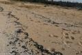 """""""مادة سوداء"""" ملوثة تغطي شواطئ لبنانية.. وجهود لحل الأزمة"""