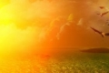 كسرت حاجز 53 مئوية... درجات حرارة قياسية في استراليا تصهر القار وتشعل الحرائق