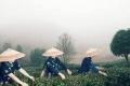 فن الشاي.. رمز للمكانة البارزة للإمبراطورية والحضارة الصينية في العالم