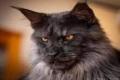 """""""القط المذهول"""" يعود للحياة ويحقق آلاف المتابعات"""