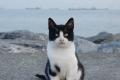 """احتجاز أول """"قطة"""" تصل عبر قوارب تهريب اللاجئين"""