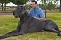 بالصور.. أكبر كلب فى العالم يزن 110 كيلوغرام يدخل موسوعة جينيس
