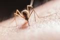 لماذا نشعر بالحكة بعد لدغات البعوض؟.. إليك طريقة التخلص منها