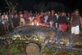 اصطياد أكبر تمساح في العالم يزيد طوله عن 21 قدم