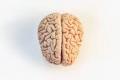 تاريخ موجز للدماغ.. العلماء لم يفهموا تماما كيف تعمل 90 مليار خلية و100 مليون وصلة ...