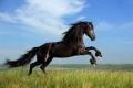 الحصان في الثقافات والأديان.. ما سر إعجاب الإنسان بالخيل منذ القدم؟