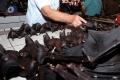 أسواق صينية تعود للحياة.. وتواصل بيع خفافيش وكلاب... شاهد