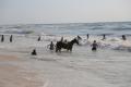 صيف غزة المزعج...مشاهد بيئية ضارة تذر المزيد من الرماد على القطاع