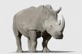 وفاة وحيد القرن الأسود الأطول عمرا في العالم