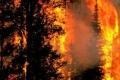 حرائق الغابات في جزر الكناري تسببت في تدمير ما يزيد عن أربعة ألاف هكتار من ...