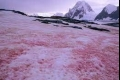 الأنهار الجليدية الدموية.. لماذا يتحول لون ثلج جبال الألب إلى اللون الوردي؟