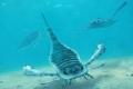 كان بعضها أكبر من البشر.. عقارب بحرية عملاقة في محيطات العصر الحجري القديم