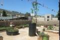 السيدة راما أبو عرة تستغل سطح منزلها لزراعة الأعشاب الطبية والأشجار المثمرة