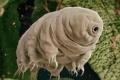المخلوق الخارق.. نصف مليار سنة على قيد الحياة ولا يمكن تدمير (بالفيديو)