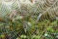 اكتشاف سر قوة خيوط شبكة العنكبوت