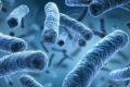 تعرَّف إلى أنواع الميكروبات التي تعيش معنا على الأرض
