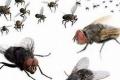 يأكل الفضلات لكنه يهتم كثيرا بالنظافة.. إليك 6 حقائق مدهشة عن الذباب