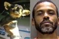 السجن سنة لأميركي رمى صلصة حارة على كلب