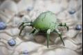 """قد لا ترى سوى الصراصير والذباب، لكن بيتك مليء بالحشرات.. تعرّف على أبرز """"ضيوفك"""""""