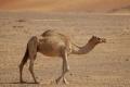 الأردن في أعلى قائمة الدول الأفقر بالمياه