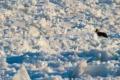بطلان فرضية فناء الأرض عام 2012 مع حل لغز الشروق المبكر لشمس غرينلاند